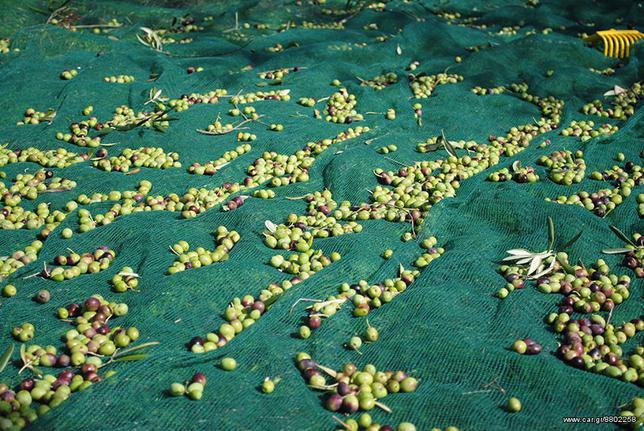 Γεωργικό ελαιουργικά-ραβδιστικά '16 agritools διχυα ελαιοσυλλογης
