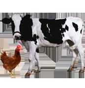 Κτηνοτροφία -Ζώα